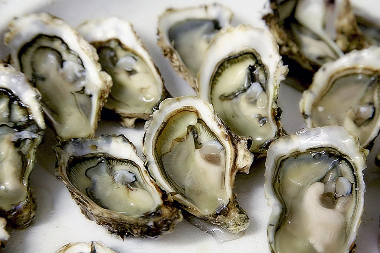 Oysters │© photo-graphe / Pixabay