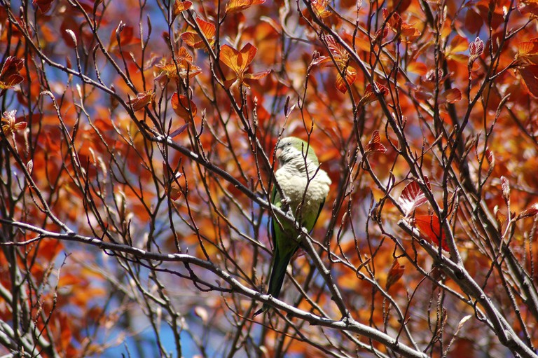 Parrot In Fall Foliage, courtesy of Steve Baldwin l Flickr