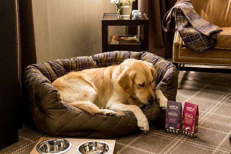 Rosewood London's resident labrador Pearl with Barbour accessories and Lily's Kitchen food