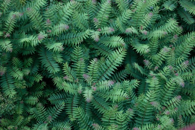 Plants at Parc des Buttes Chaumont │Caroline Peyronel / © Culture Trip
