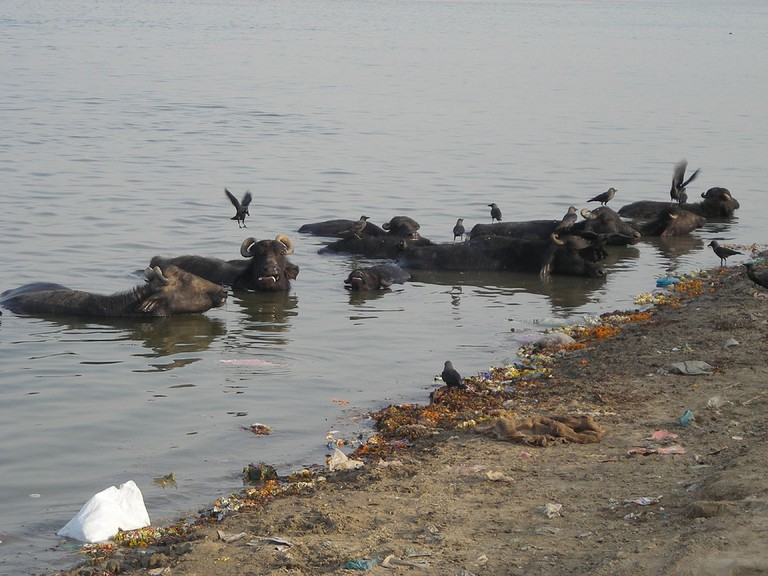 Pollution and waste in Ganges River