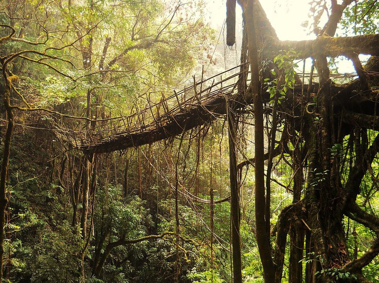 Rangthylliang, a living root bridge over 50 m (165 ft) long | © Anselmrogers / Wikimedia Commons
