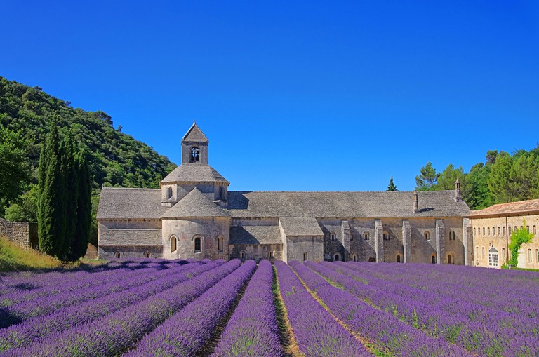 The beautiful lavender fields at Sénanque Abbey