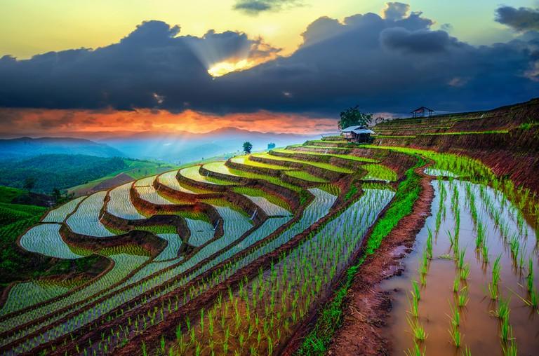 Rice paddies in Indonesia | © Travel Mania/Shutterstock