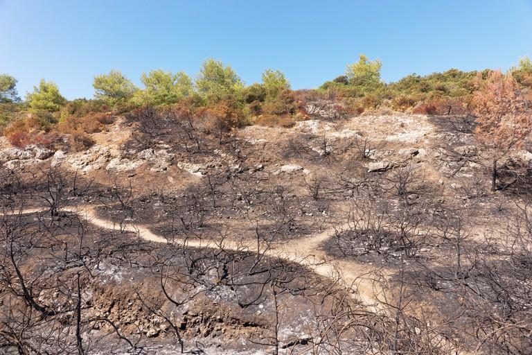 Burned forest land