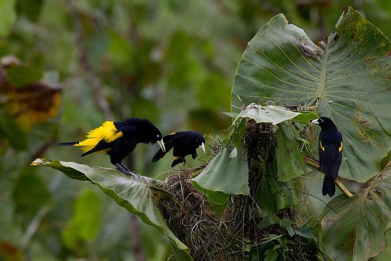 Ecuadorian wildlife I