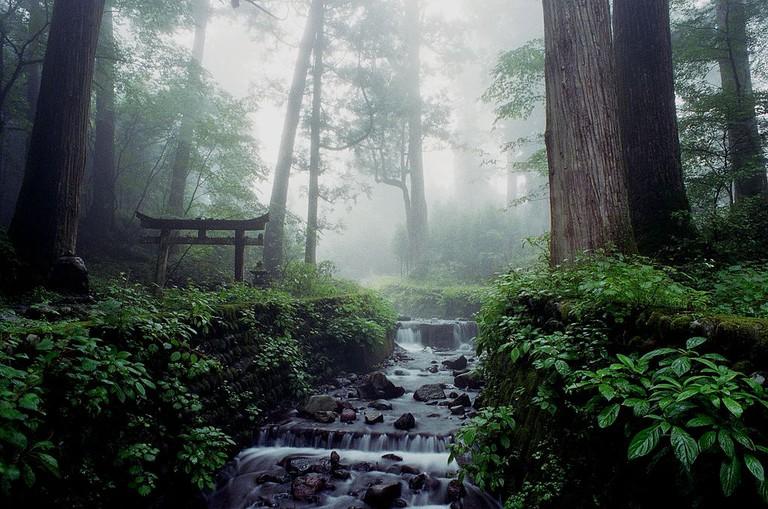 Forests around Nikko
