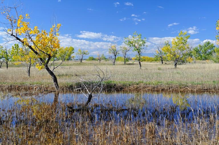 Marsh at Cherry Creek State Park