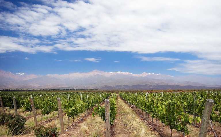 Vineyard near Los Árboles in Uco Valley, Mendoza, Argentina, in front of the Andes Mountains