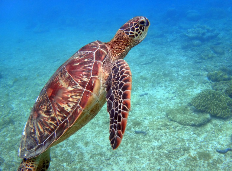Close encounter with a turtle at Apo Island