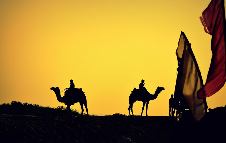 Between 2007 and 2012 there was a drop of about 23% in the camel population