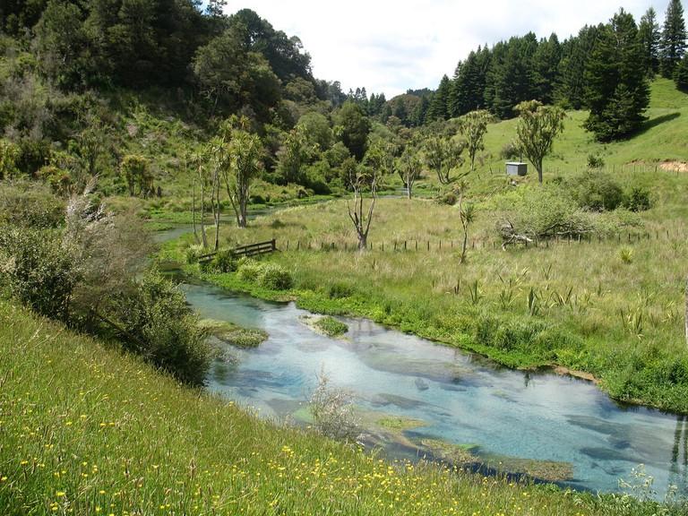 Te Waihou Walkway view of Putaruru's Blue Spring