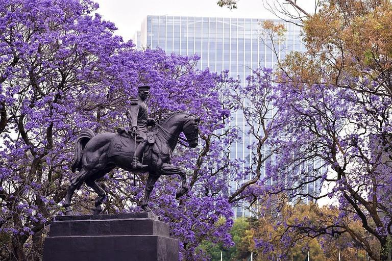Jacaranda trees in Mexico City / flickr