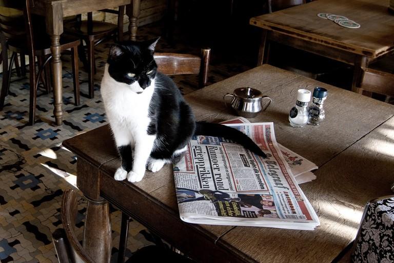 A pub cat chilling in Amsterdam