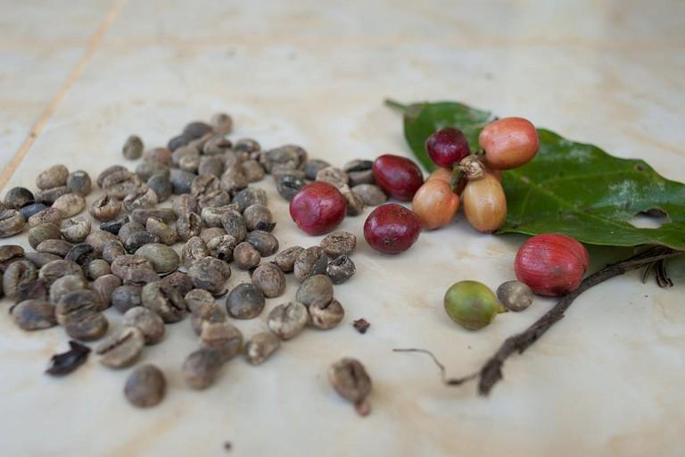 coffee making antigua
