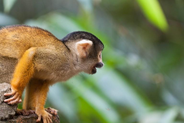 Monkey on Rurre jungle tour