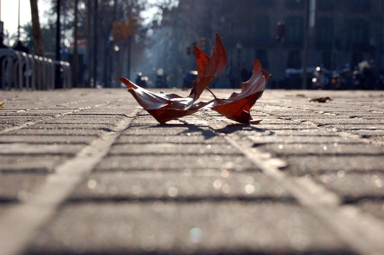 Fell autumn all around you © Tania Cataldo