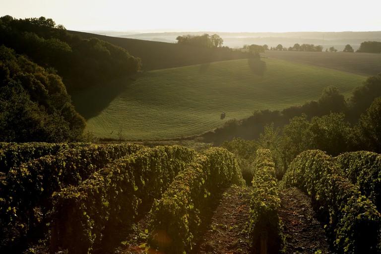 The vineyards of Sancerre at dusk