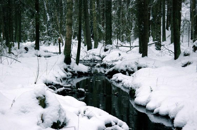 Nuuksio National Park in winter