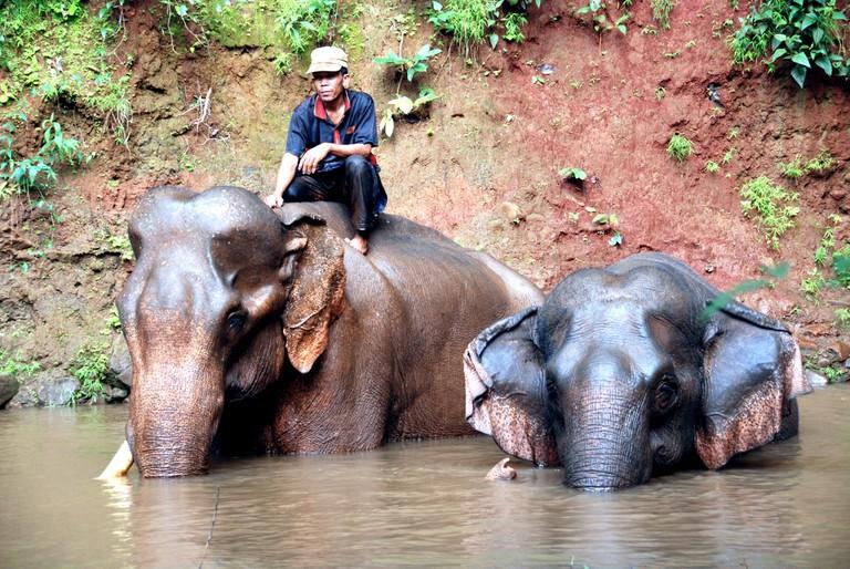 Elephant Valley Project in Monduliri