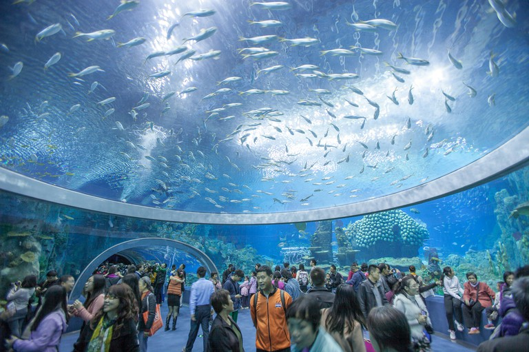 Hengqin Island is already home to the world's largest ocean theme park