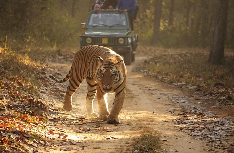 Royal Bengal tiger | Dey.sandip/WikiCommons