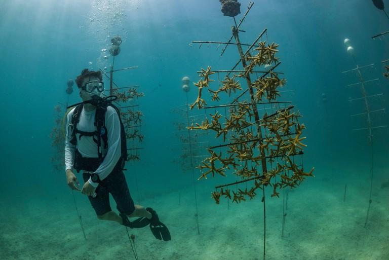 Zack Rago at the Mote Marine Laboratory's coral nursery off the Summerland Key, Florida