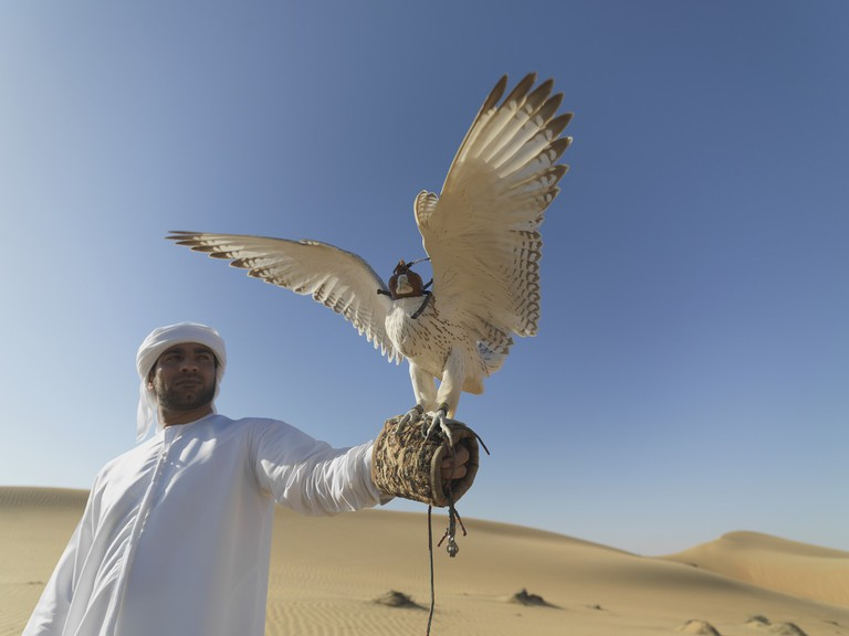 To form an effective pairing, a falconer needs to develop a close relationship with his falcon   © neildodhia/Pixabay