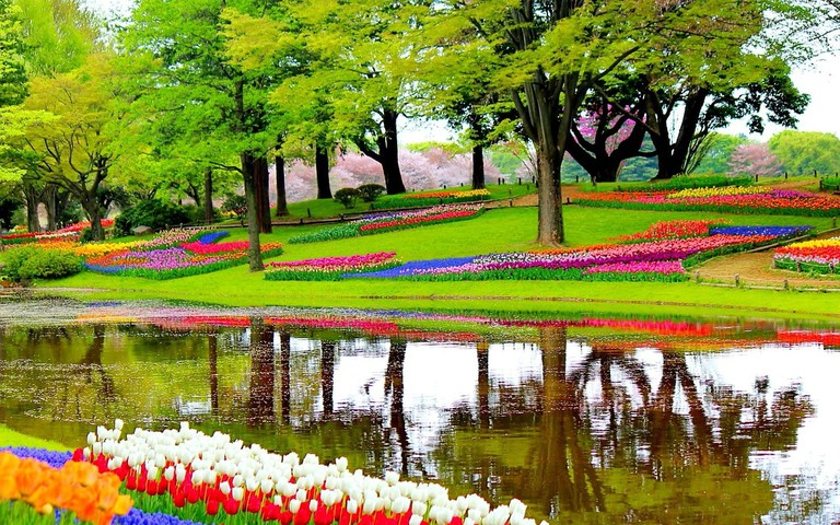 Keukenhof gardens are renowned for their beautiful tulip fields