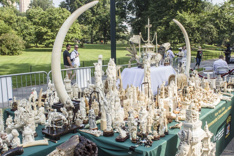 Illegal ivory seized in NYC | © Culture Trip