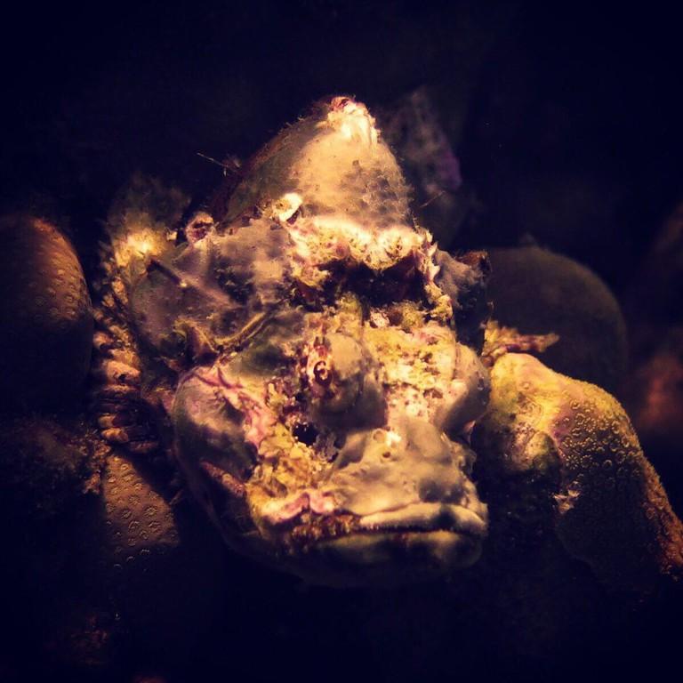 Sea life in Aqaba