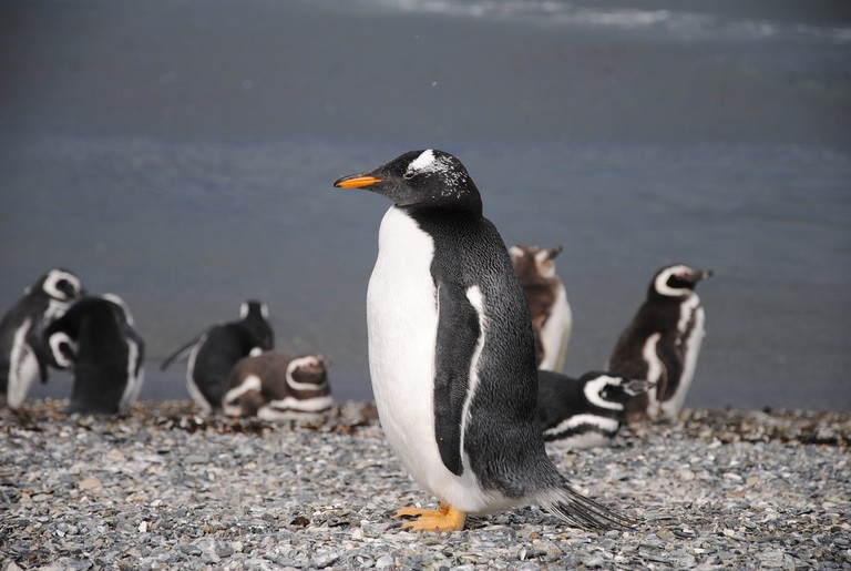Make friends with penguins in Tierra del Fuego