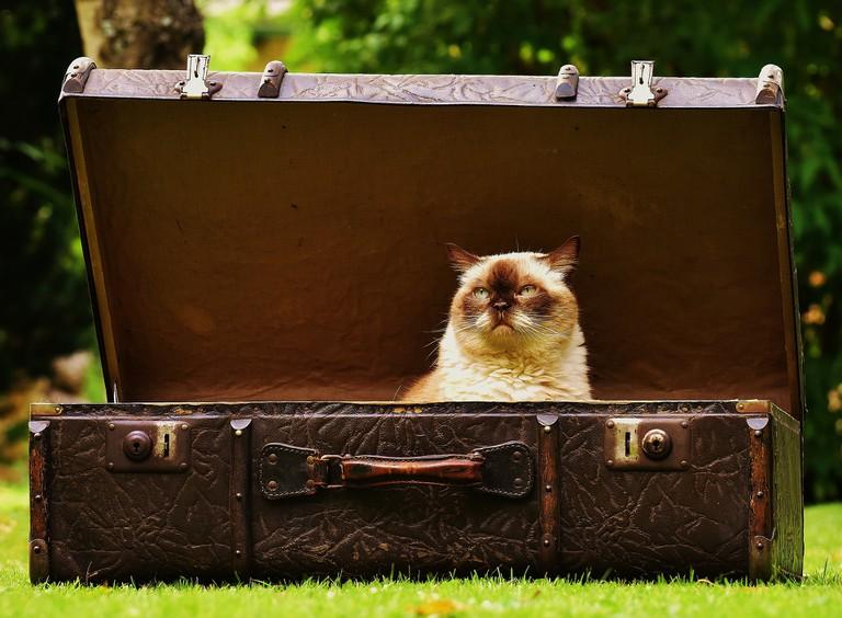Cat in suitcase | © Alexandra München/Pixabay