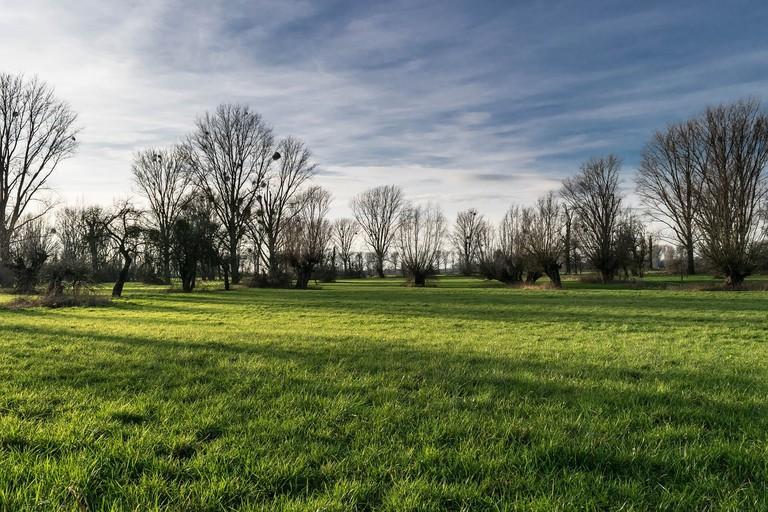 Urdenbacher Kämpe meadow