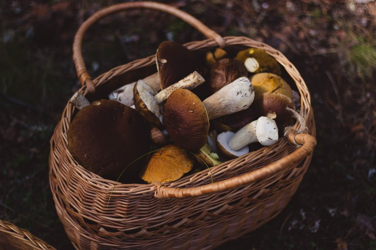 A basket of wild mushrooms
