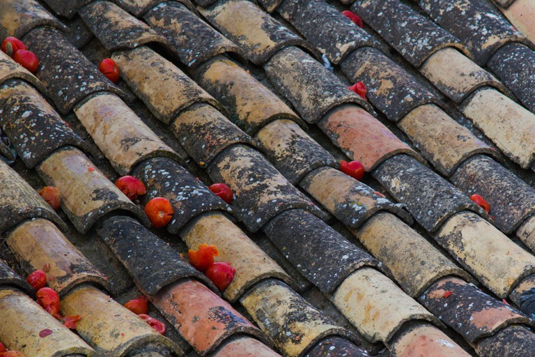 Tomatoes on roof tiles after Tomatina festival