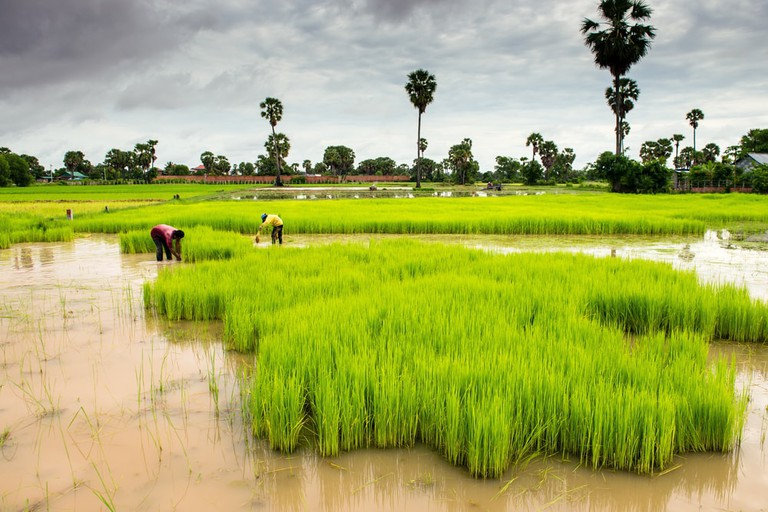 Cambodia is alive with colour during wet season | © Pablo Rogat/Shutterstock