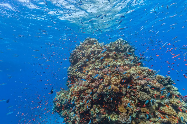 This and more lies in store, underneath the Red Sea | © Jag_cz/Shutterstock