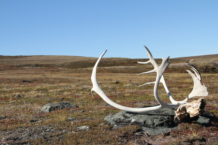 Nunavut's tundra landscape