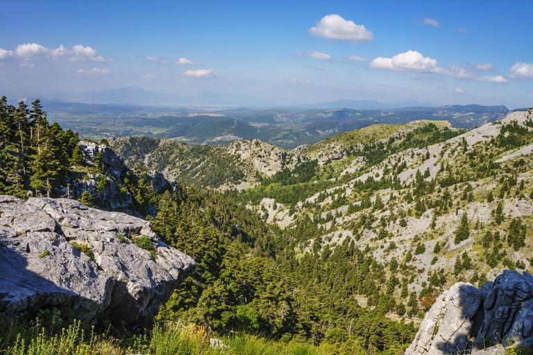 Dirfi forest, Evia
