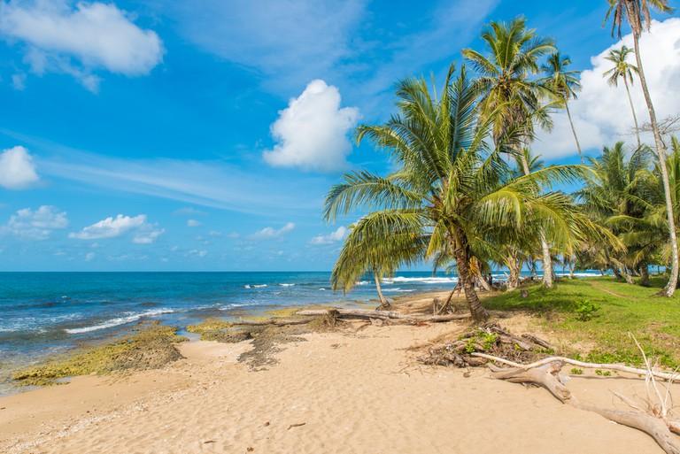 Shady Palms on Playa Cocles   © Simon Dannhauer/Shutterstock