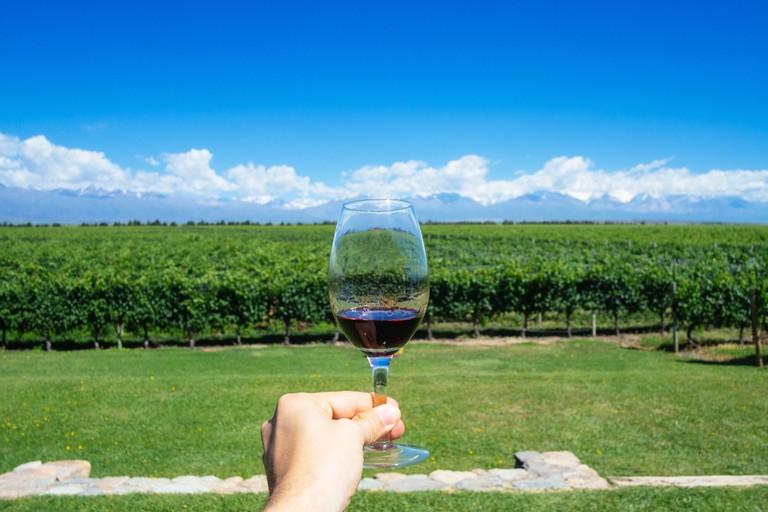 Vineyard, Mendoza