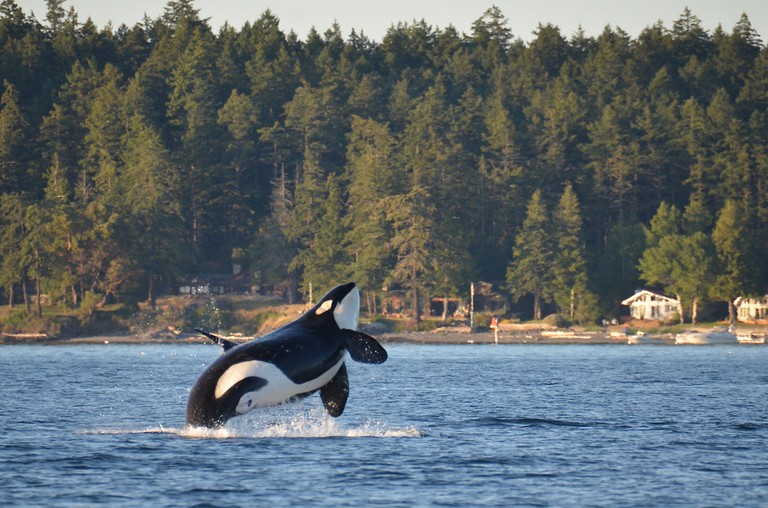 Seattle offers some of the best whale-watching spots in the country