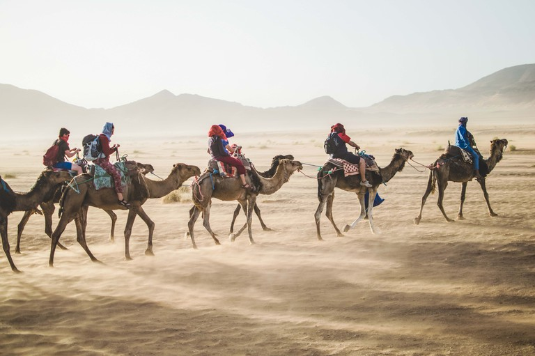 While India's camel population declined rapidly between 1992 to 2012, the global camel population was on a rise
