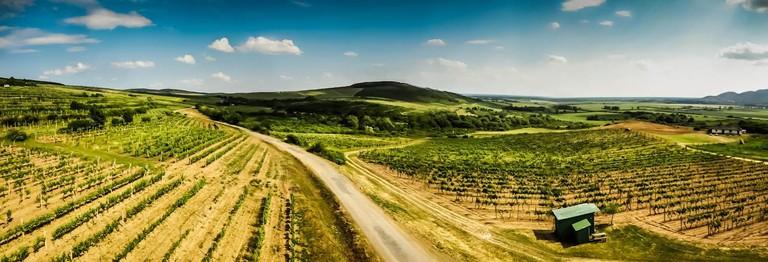 Vineyards in the Slovakian Tokaj region I