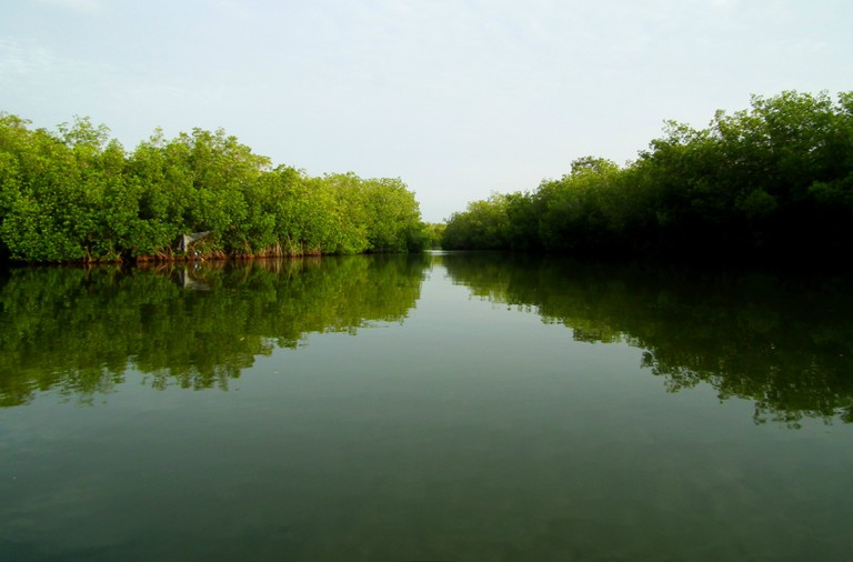 Exploring the mangroves of La Boquilla