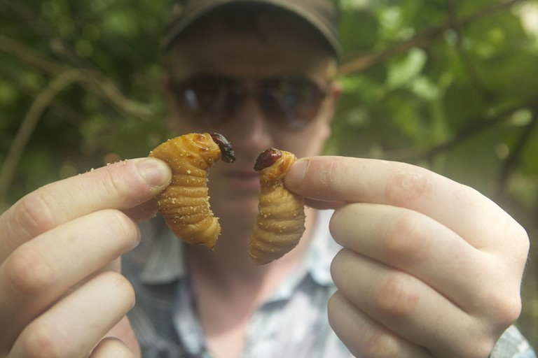 Ben Reade with Palm Weevil Larvae. Photo by Andreas Johnsen,