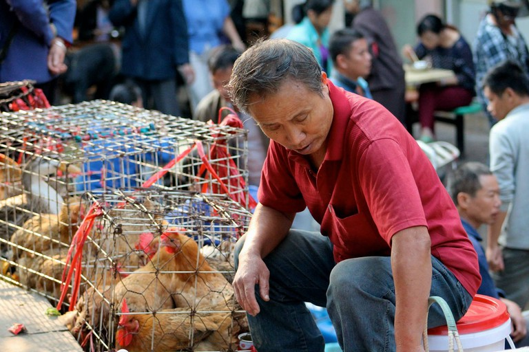 Chicken vendor at a market in Guilin © Bailey Berg