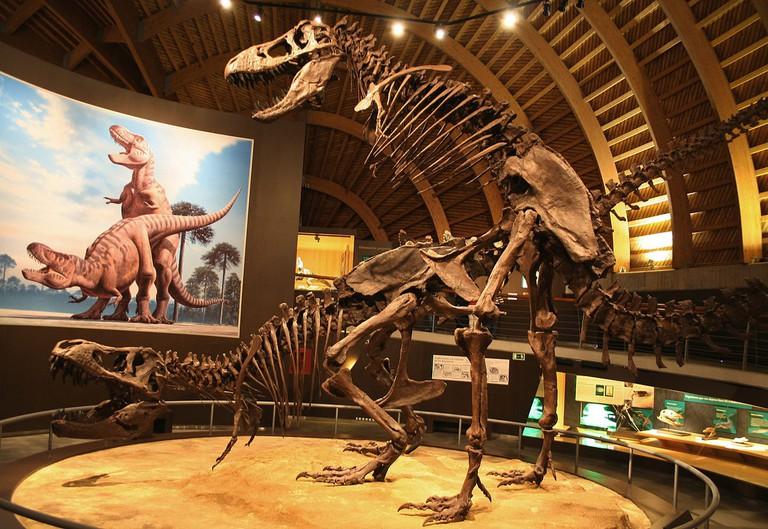 Jurassic Museum of Asturias, Spain | ©Mario modesto / Wikimedia Commons