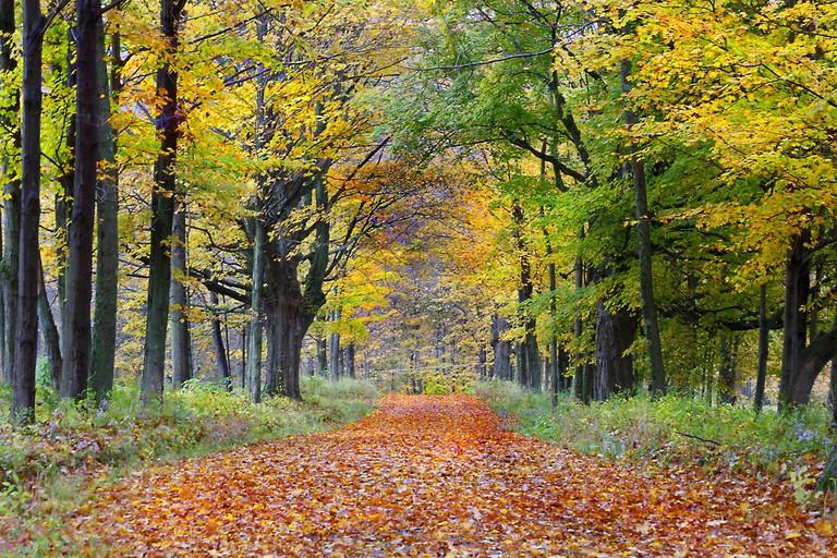 Scenic Berkshire Road